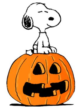 dog on pumpkin
